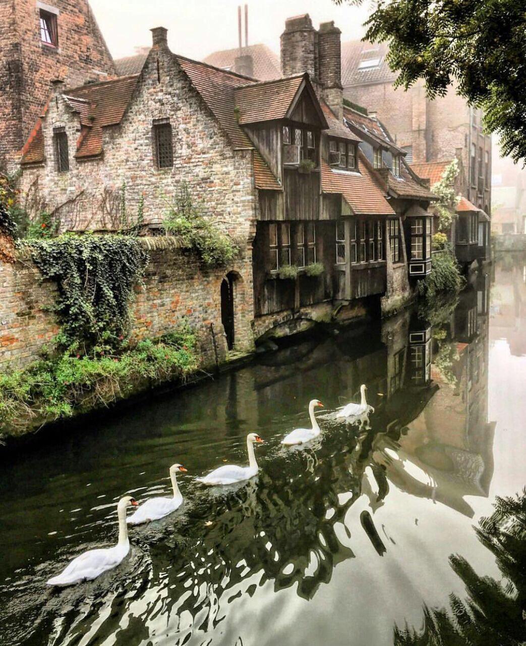 Bruges Brugge canals GO experience Belgica swans