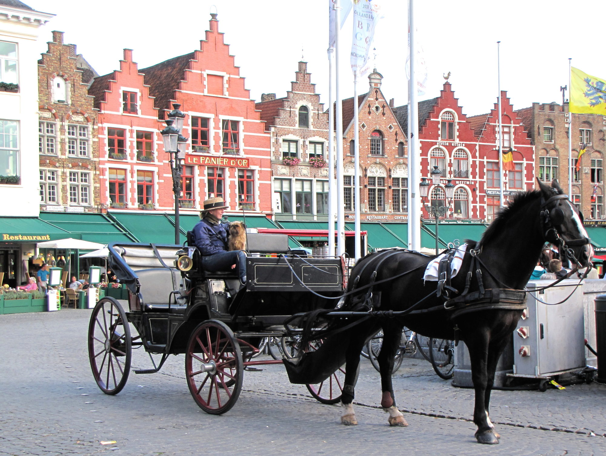 Bruges horses Brugge GO experience