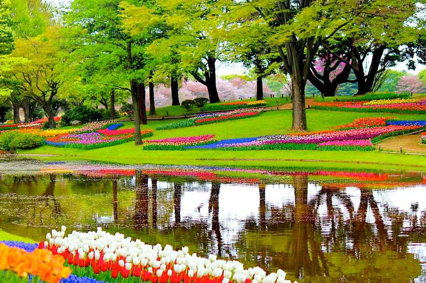 Keukenhof Go Experience tulips tulipas flower fields