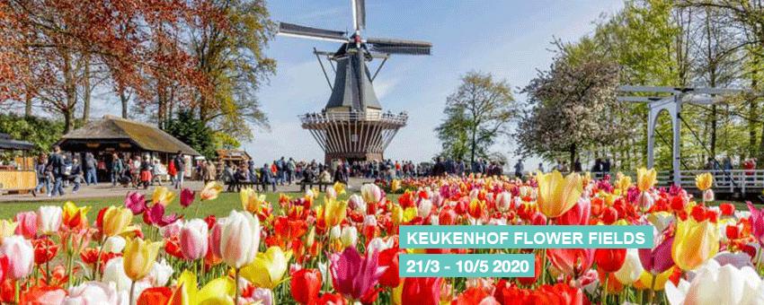 Keukenhof Flower Fields Tulips GO Experience guided tours 2020